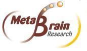Metabrain Research et Medicxi s'associent pour créer Kymo Therapeutics